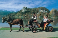Visit Bled